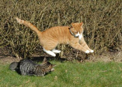 壮絶なる2匹の猫09