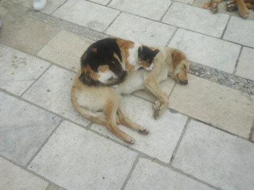 猫にベッドを奪われる犬たち24