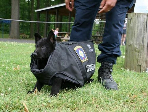 サービス犬の子犬05