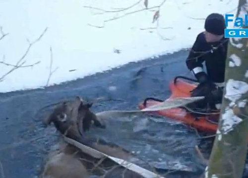 湖に落ちた鹿を救助02