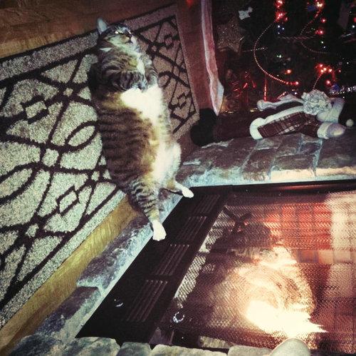 足を暖める猫03