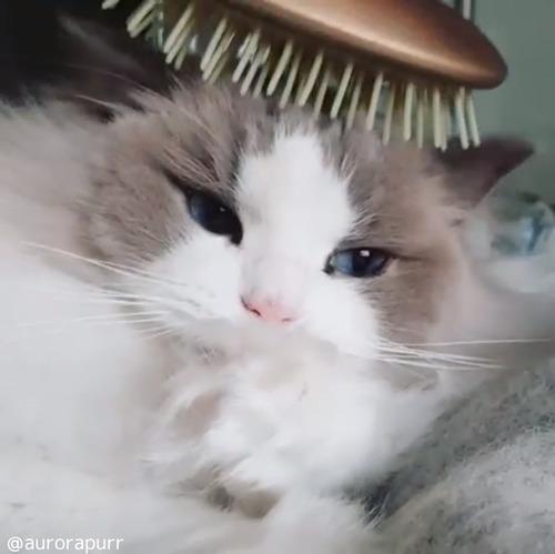 うちの猫はアレを使うと速攻寝る02
