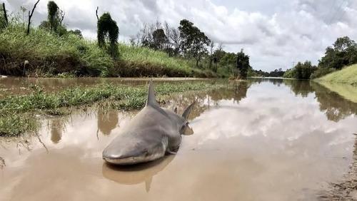 嵐が去ったら陸地に人食いザメ01