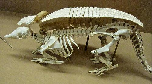 亀の骨格04