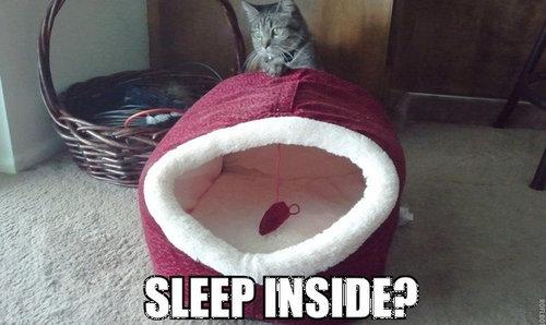 猫が寝るときにありがちなこと01