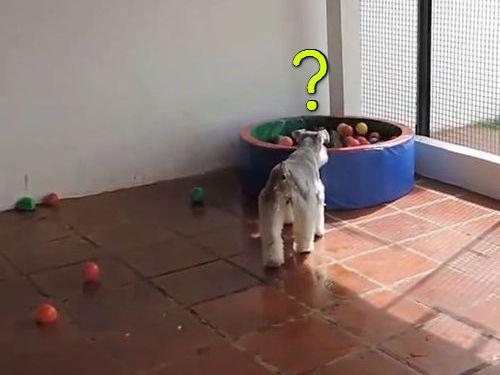 ボールプール00