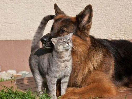 犬と猫がギュッ00