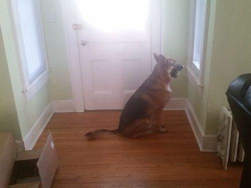 妻の帰りが遅かった時の犬01