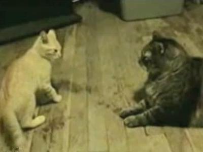 師匠と弟子猫