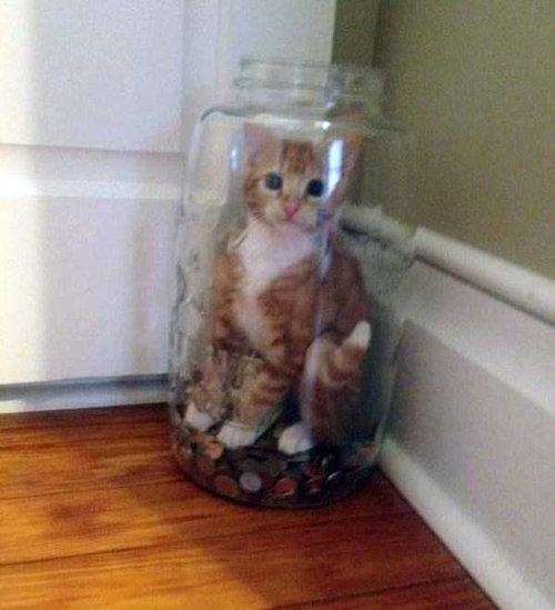 猫の謎の行動12