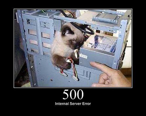 猫でHTTPステータスコード24