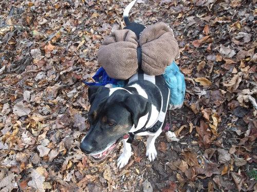 犬と一緒にバックパッカー10