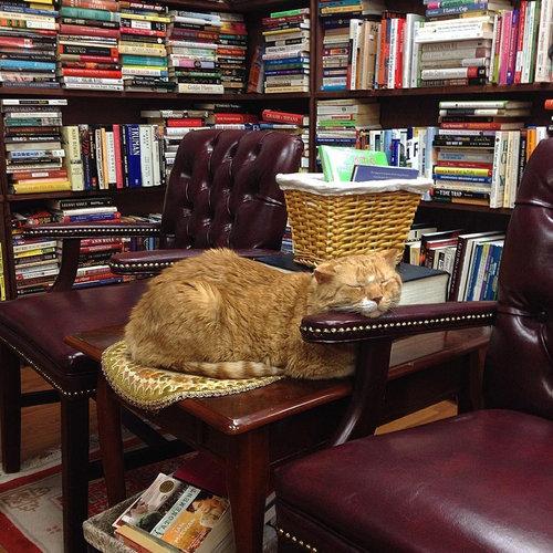 本屋の猫07