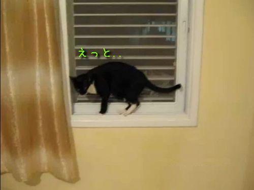 猫のお行儀の良い降り方