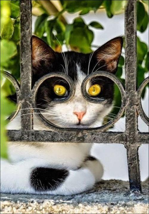 楽しい猫たち05