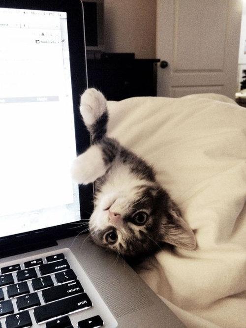 猫に生活を脅かされる10