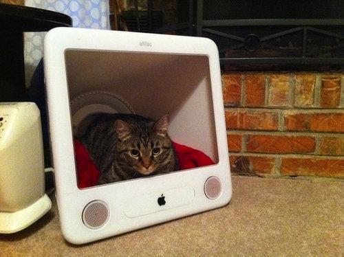 iMacと猫06