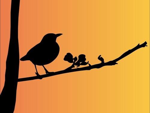 オヤジ顔の鳥00