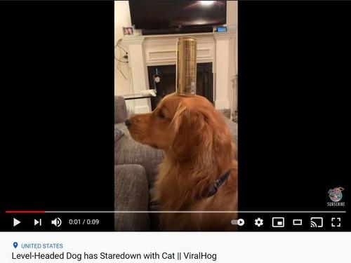 頭に缶を載せた犬、その見つめる先には…猫!