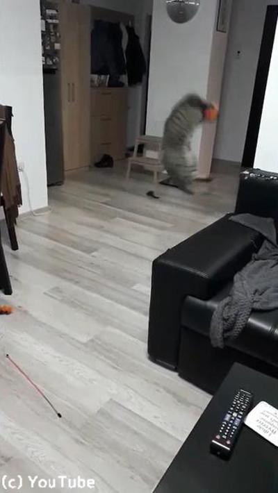 キャッチボール上手な猫02