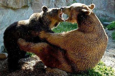 クマが釣られたり戦ったりあられもない格好したりする画像02