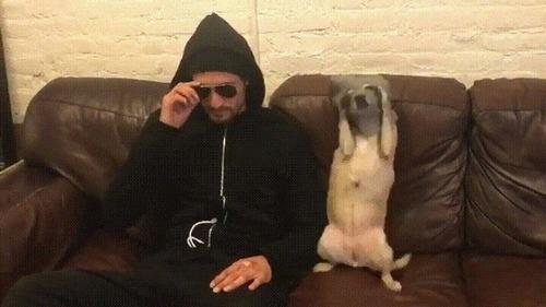 悪い犬と飼い主03