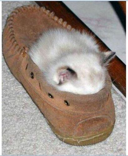 眠る猫02