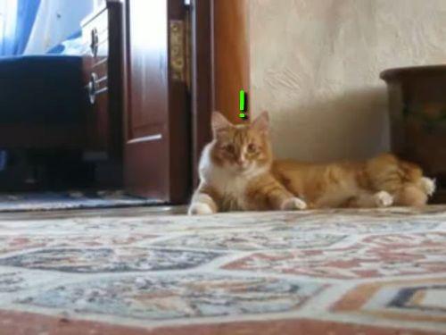 変な歩き方をする猫