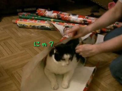 包装される猫
