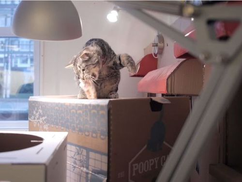 職場が猫だらけだったら06