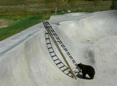 クマの脱出01