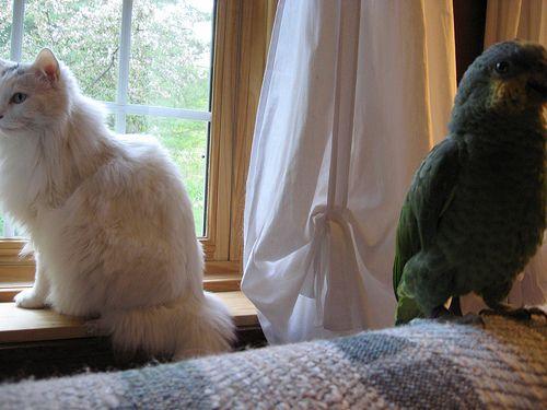 インコと猫15