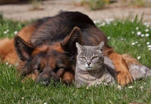 犬と猫がギュッ03