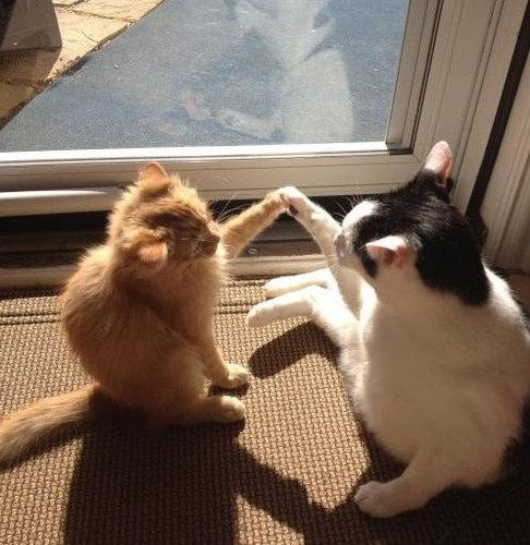 猫のハイタッチ04