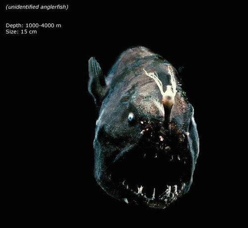 深海の生き物11