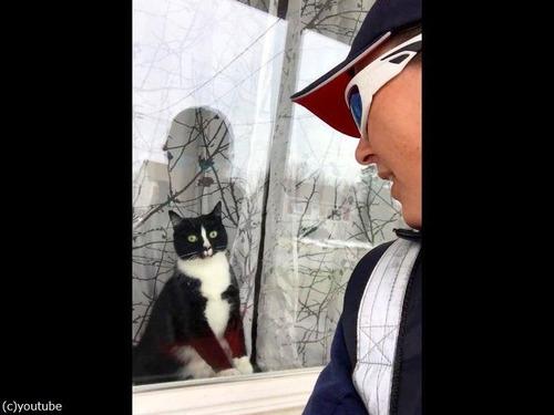 激しいあいさつ猫03