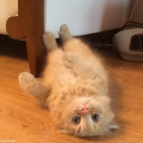 うちの猫は呼ぶと…ニンジャのように登場する05
