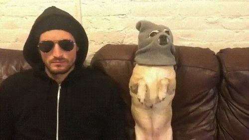 悪い犬と飼い主05