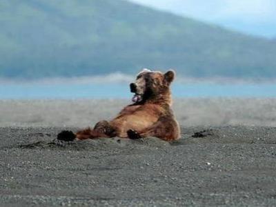 クマさんが「やぁ」01