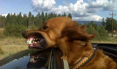 犬の表情19