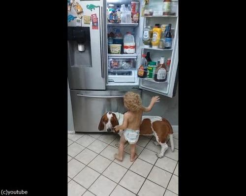 赤ちゃんを助ける犬02