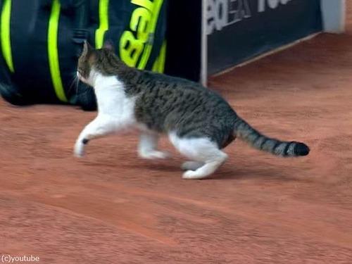 テニスの試合に猫が乱入00