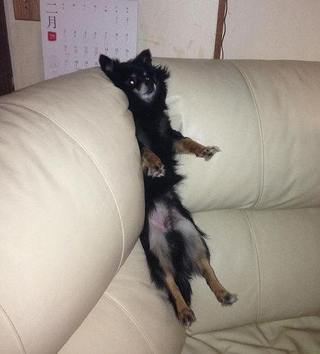 犬や猫の家具の使い方04