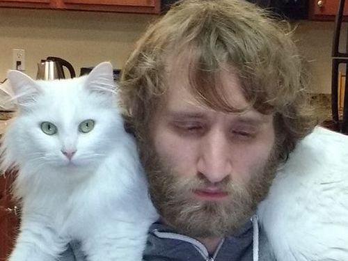 猫はパソコンに乗りたがる03