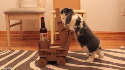 ビールを持ってきてくれるウサギ04