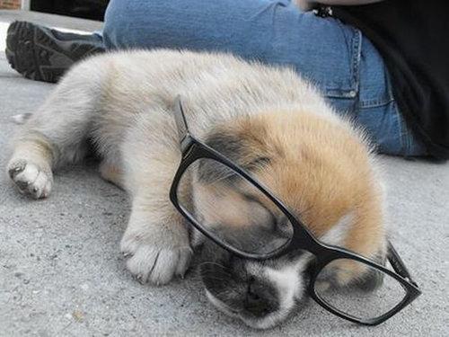 09メガネやサングラスをかける動物たち
