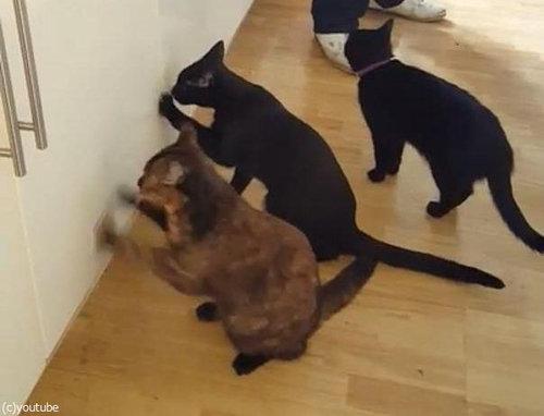 猫2匹が戸棚を連打02
