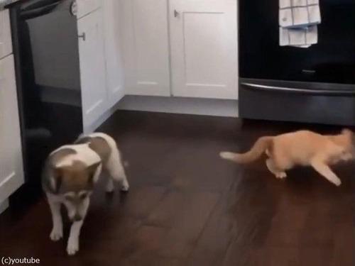 「猫がキッチンカウンターの上に乗らないようにする方法」04