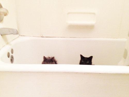 密談する猫たち16