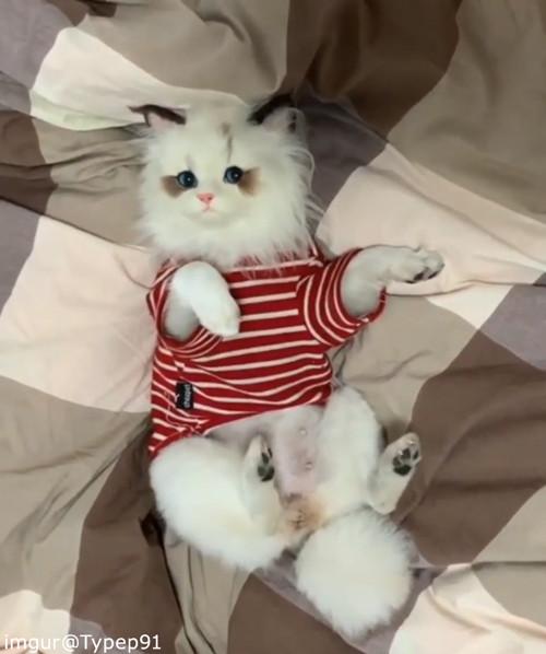 かわいい猫かと思ったら…ちょっとドッキリ01